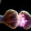 nerve synapse